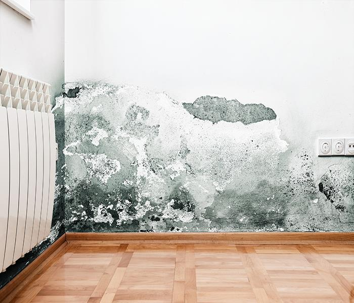 Mold Remediation Chugiak Mold: Your Quick Reference Guide